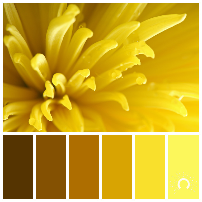 color palette, color combination, Farbpalette, hue, yellow, gelb, yellow-orange, gelb-orange, orange, braun, brown