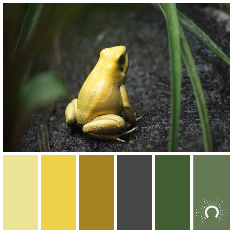 color palette, color combination, Farbpalette, frog, Frosch, Matsch