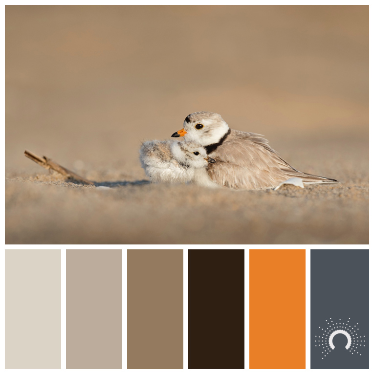 color palette, color combination, Farbpalette, Blatt, vogel, bird, nest