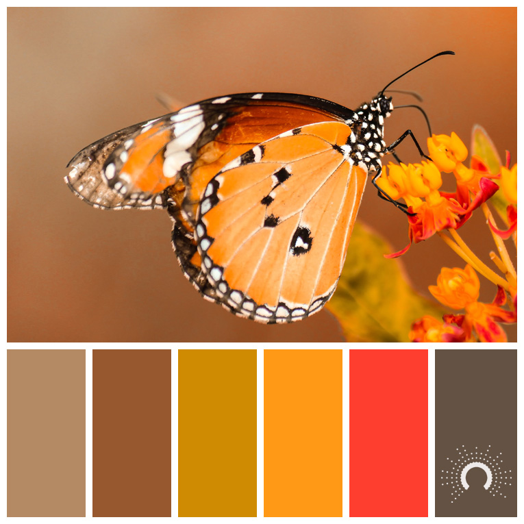 color palette, color combination, Farbpalette, hue, yellow-orange, yellow-orange shade, red, orange shade, gelb, orange, red, braun