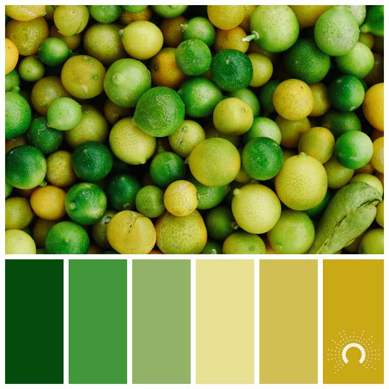 color palette, color combination, Farbpalette, Limetten, Limes, Ernte, harvest