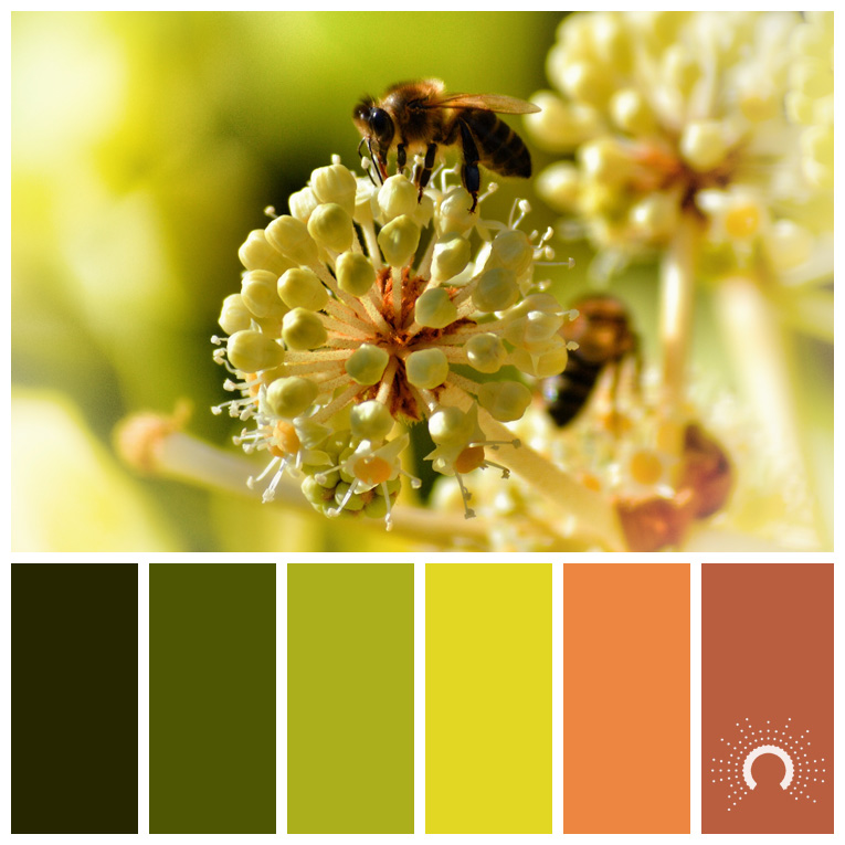 color palette, color combination, Farbpalette, hue, Blume, Wiese, flower, bee
