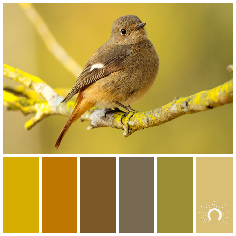 color palette, color combination, Farbpalette, Vögel, Vogel, Natur, bird, birds, nature