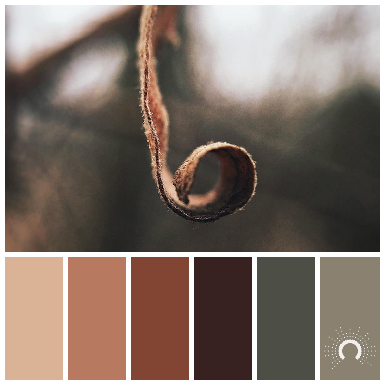 color palette, color combination, Farbpalette, Blatt, leaf