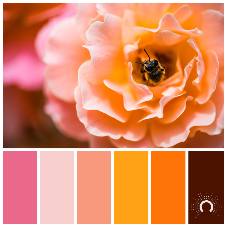 color palette, color combination, Farbpalette, hue, red-orange, rotorange, braun, brown, yellow-orange, gelborange, orange, pink, brown, braun