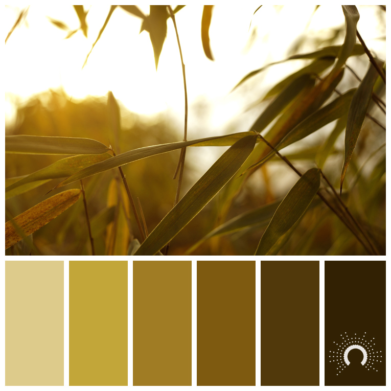 color palette, color combination, Farbpalette, reed, Schilf
