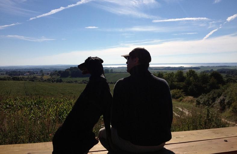 Hunde auf Insel Ruegen