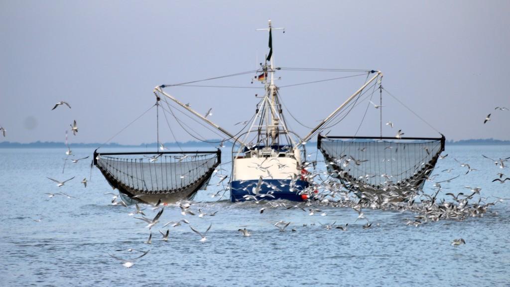 Der Krabbenfischer von Dangast