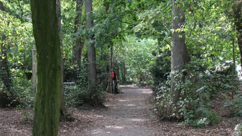 Waldweg von der Ferienwohnung zum Kurstrand