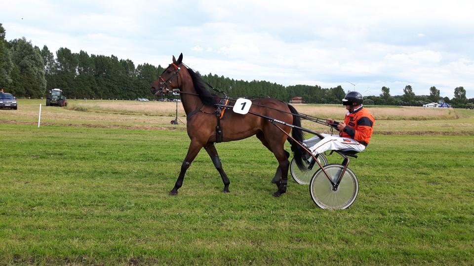 Ausflug zum Pferderennen in Hooksiel