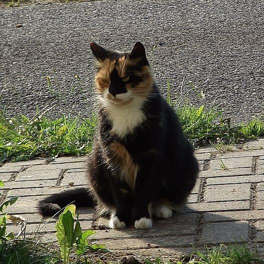 "Auf unserem Hof residiert auch unsere Katze ""KittyKittie"""