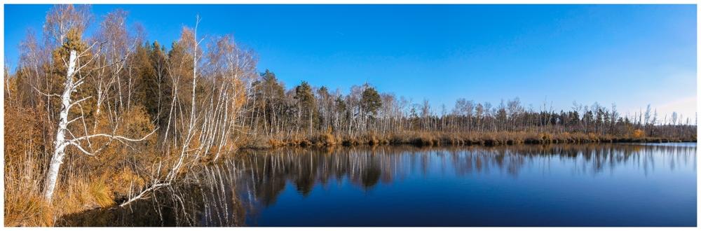 Uferlandschaft Fünfeckweiher 7280