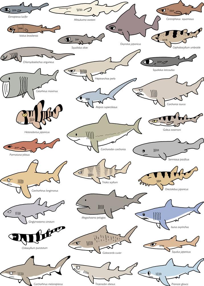 サメ カラー 2015年