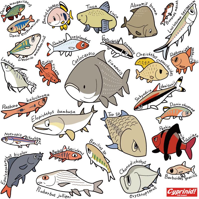 世界のコイ科魚類 2016年