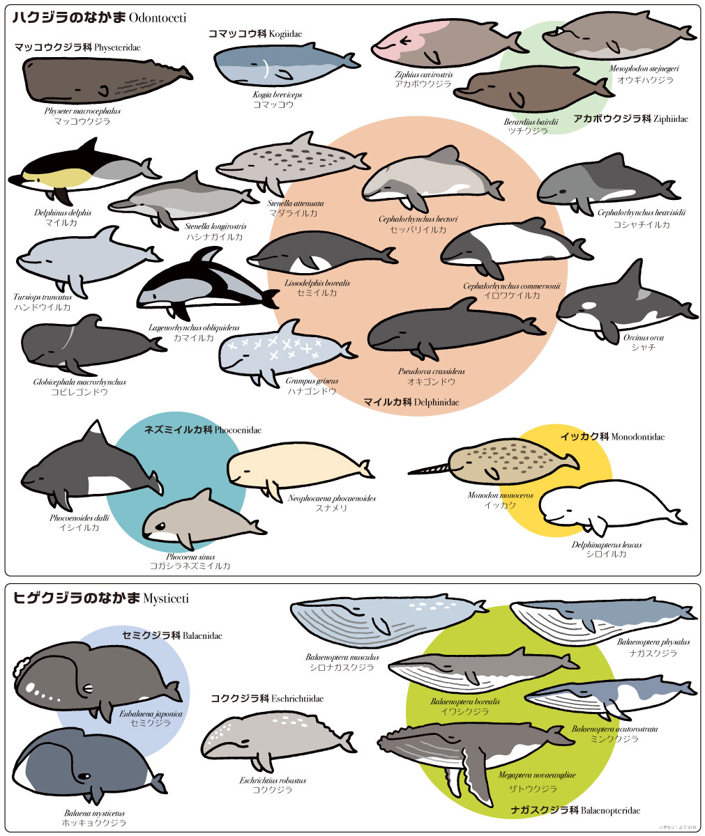 クジラとイルカ 2016年