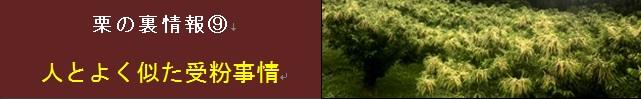 【松尾栗園】栗の裏情報⑨ 人とよく似た受粉事情
