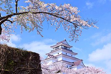 桜咲く会津鶴ヶ城