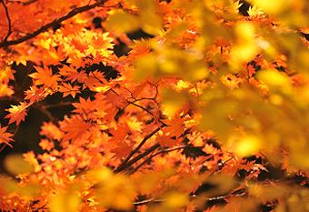 秋のモデルコース