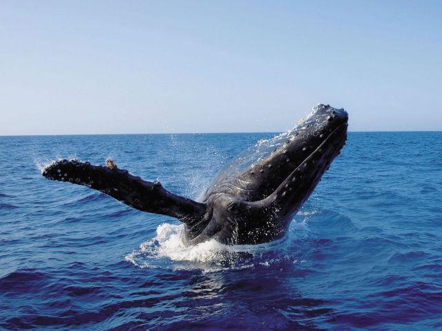 鯨との出会い