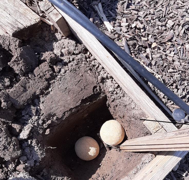 In das Loch kommen Bokashi-Balls