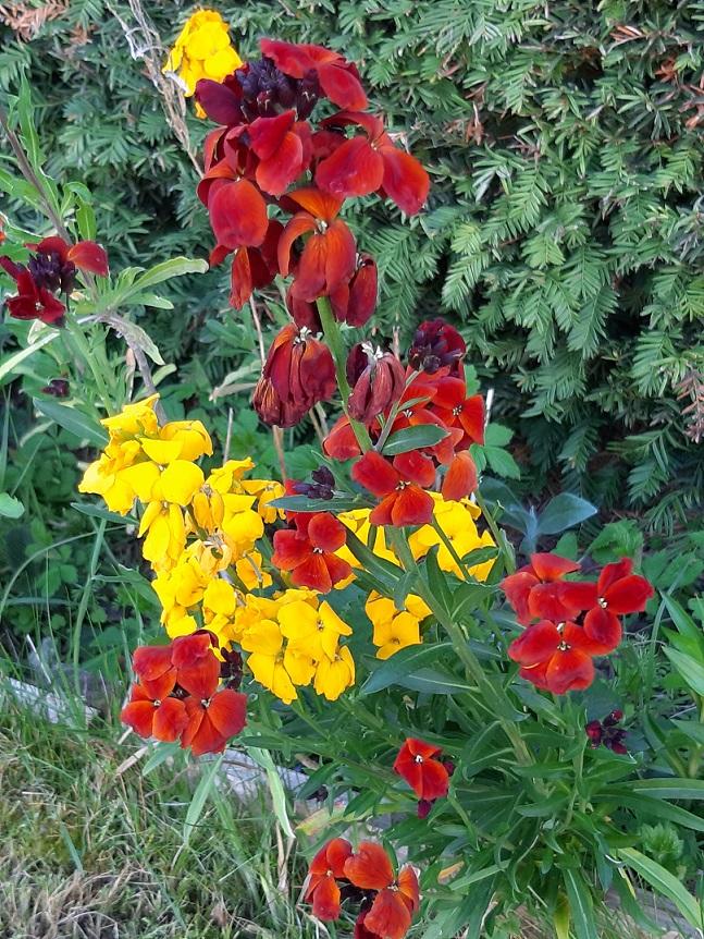 Farbenmix - Wir lieben das vielfältige  Blühen