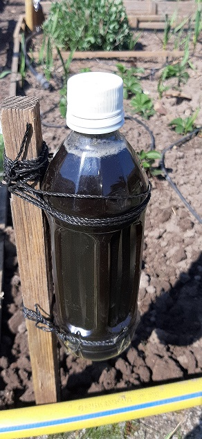 an jeder Ecke wird eine Flasche mit gutem EMa gehängt, an die eine 6-V-Li-Ionen-Batterie befestigt wird. Im EMa sind 10 gr. Biokohlegries und 10 ML EM-X-Gold enthalten