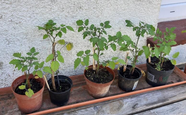 Weitere EM-Jungpflanzen, es blieb kaum eine übrig
