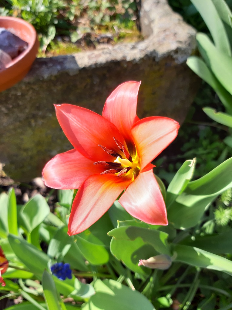 Prachtvollen Blüten