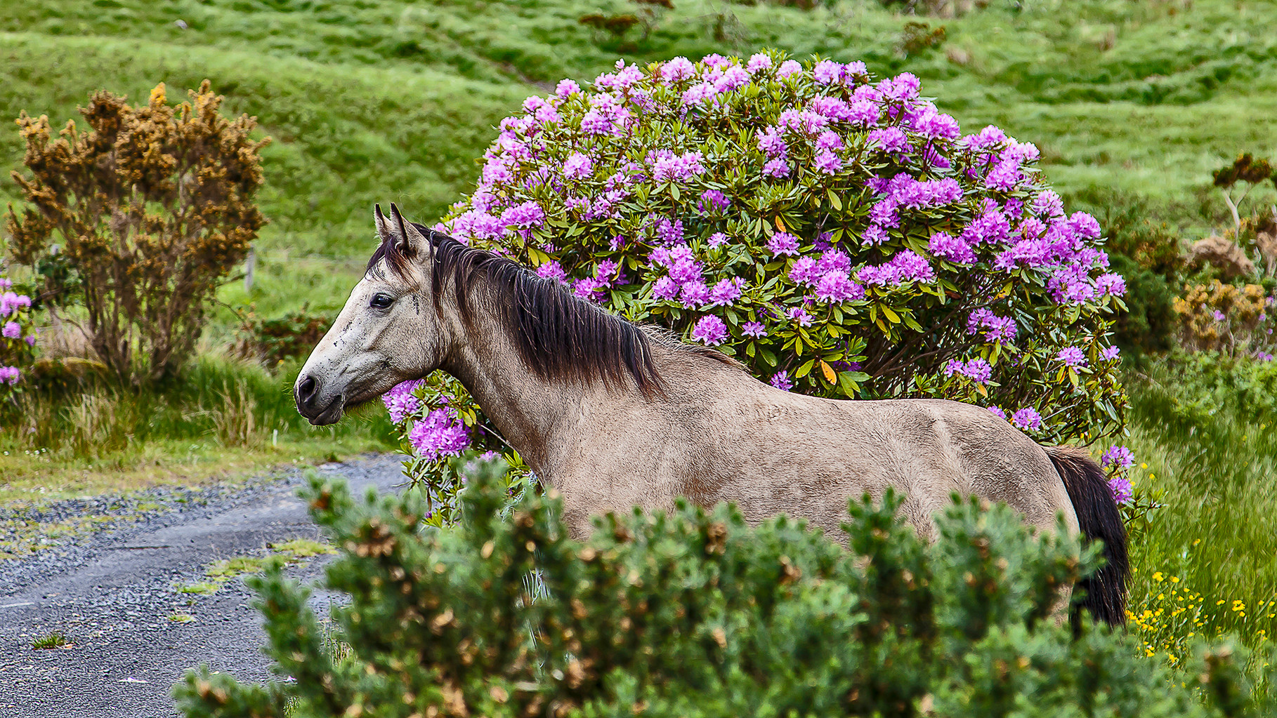 Horse at Ashleagh falls, Connemara, County Galway