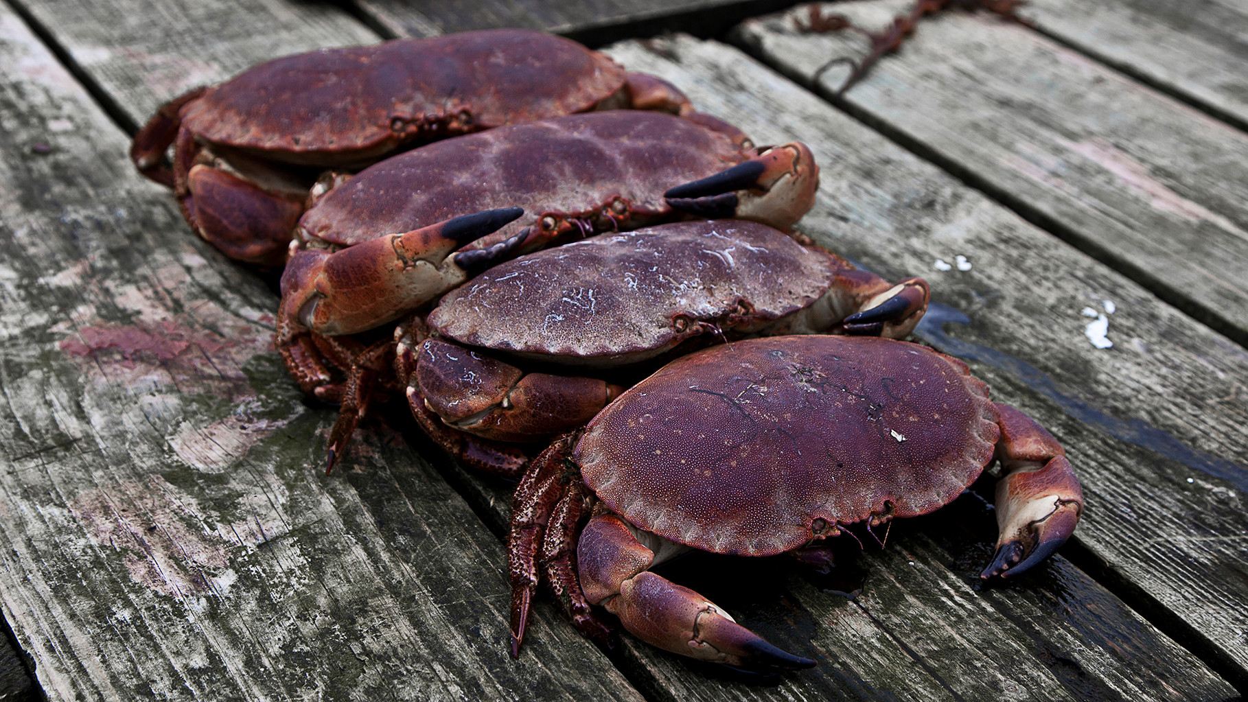 Crabs in Portmagee, Iveragh peninsula, County Kerry