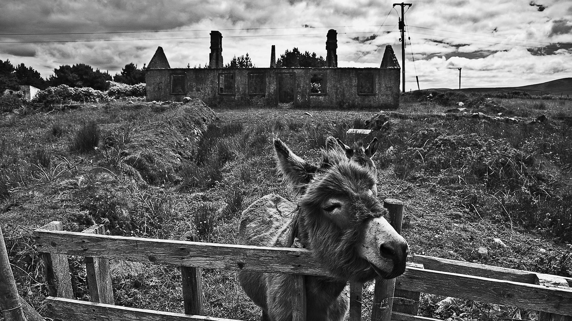 Home, sweet home - Donkey on Achill Island, County Mayo
