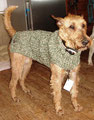 Gillan - Irish Terrier