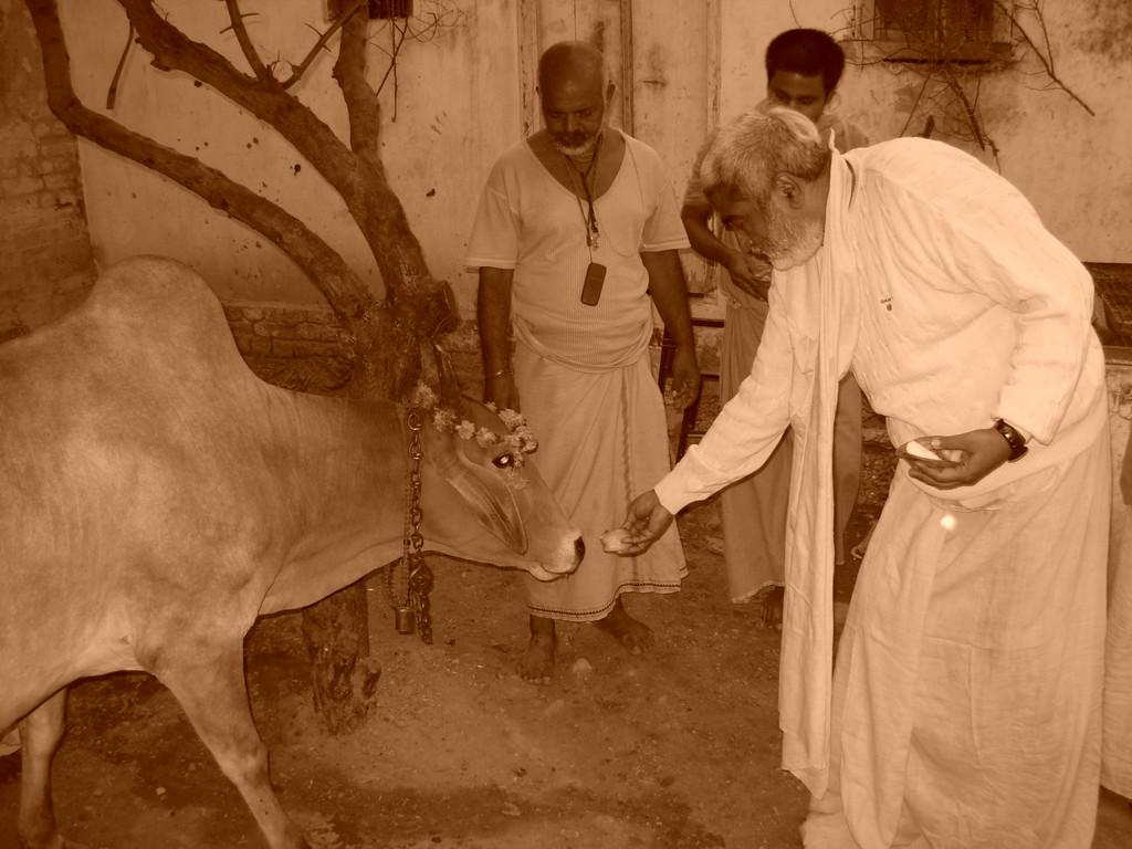 Cow Sewa