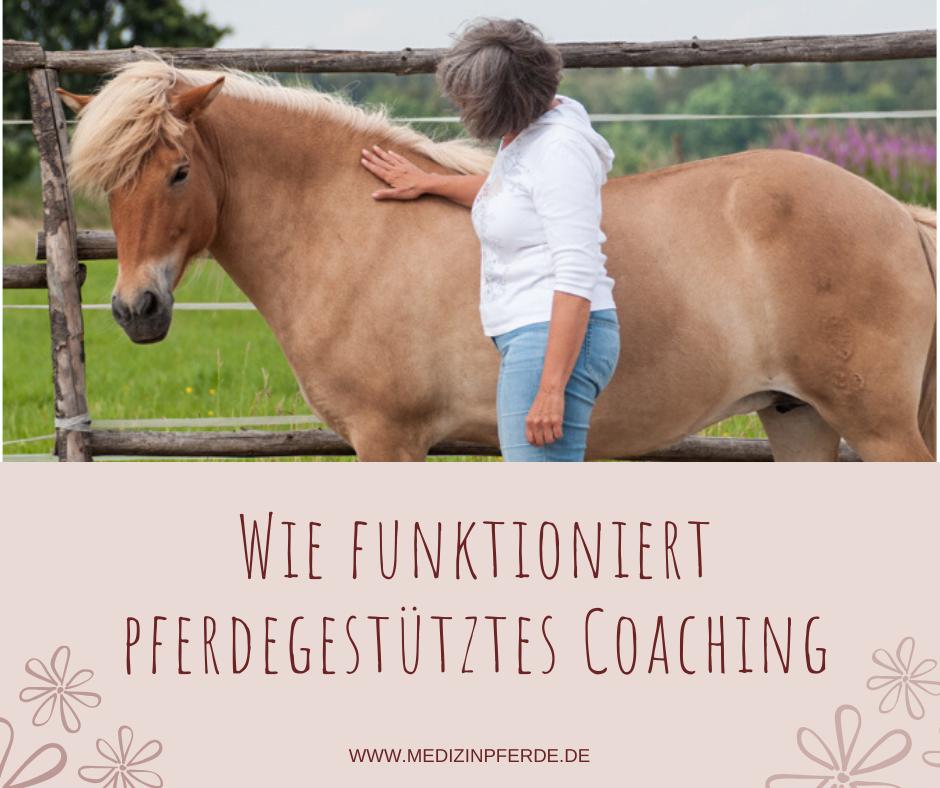 Wie man sich pferdegestützte Persönlichkeitsentwicklung vorstellen kann