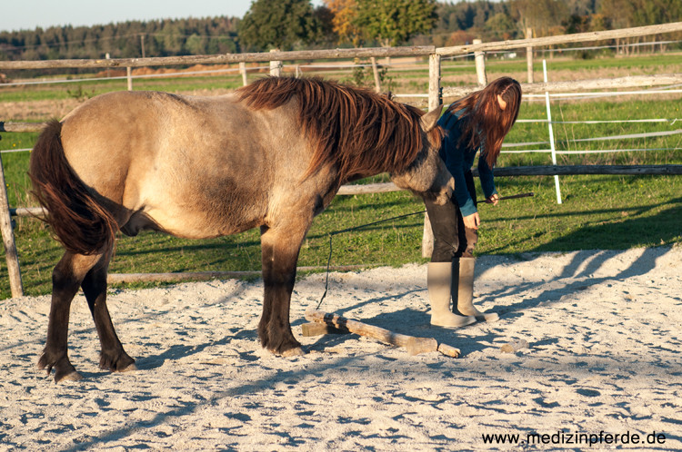 Ich lade ihn mit der Hand ein mir über die Stange zu folgen. Auch wenn es anders scheint, man braucht keine Lekerlies, um ein Pferd zu motivieren. Wenn es komplett freiwillig etwas tut, kann ich sicher sein, dass es auch wirklich Spaß daran hat.