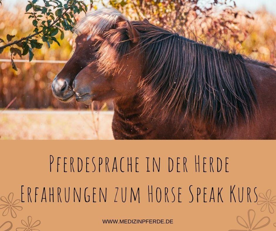 Pferdesprache in der Herde: Erfahrungen zum Horse Speak Kurs