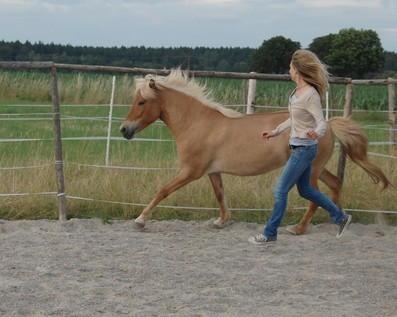 freiarbeit bodenarbeit beruf fein pferdegerecht beziehungen coaching leadership führung