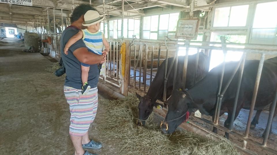 牛と初対面