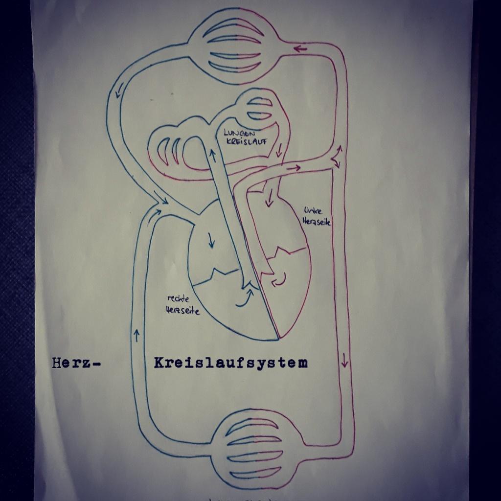 Anatomie/Physiologie - aktivzeit-berlins Webseite!