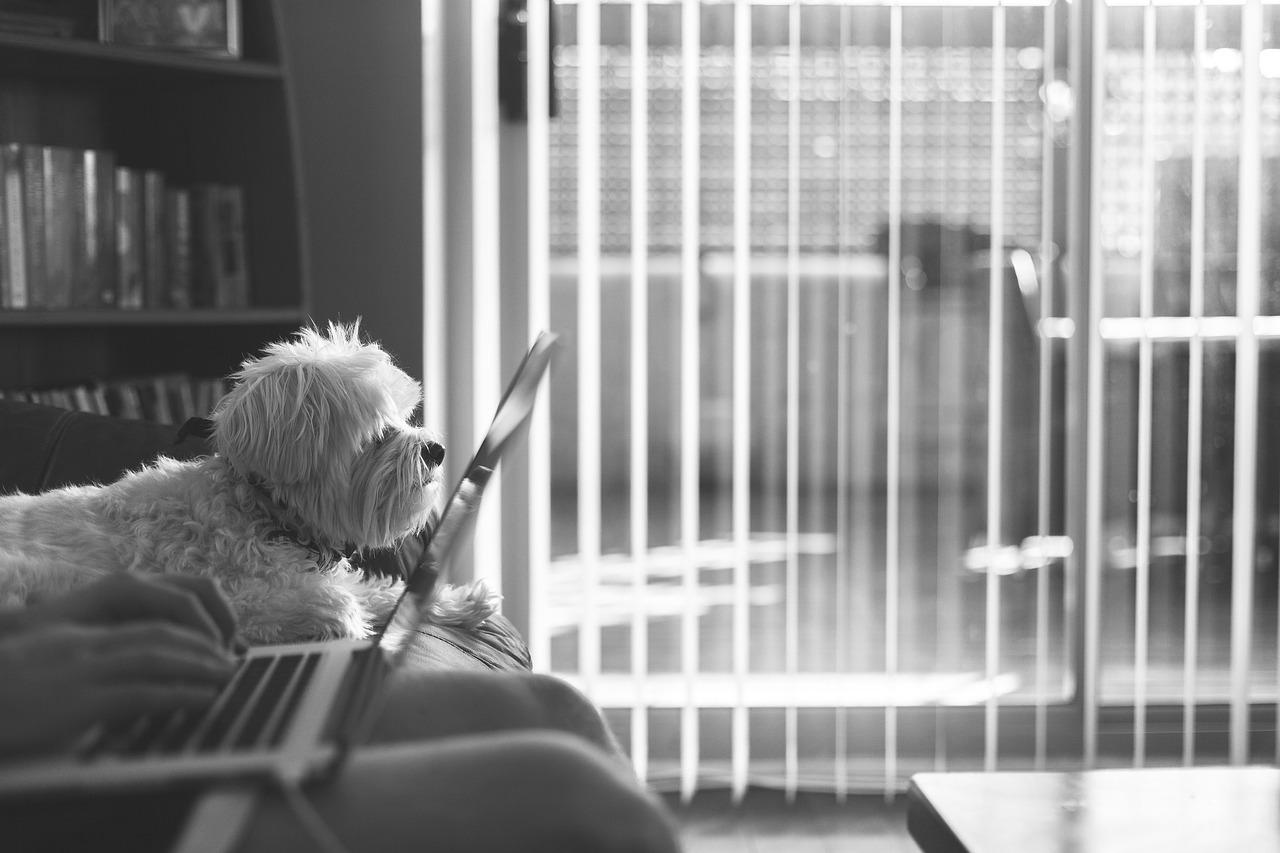 Terapia online - A domicilio