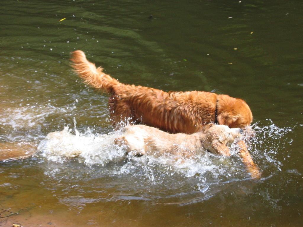 Noah zeigt Nele wie man taucht