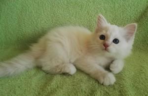 Tiziano, 10 Wochen alt