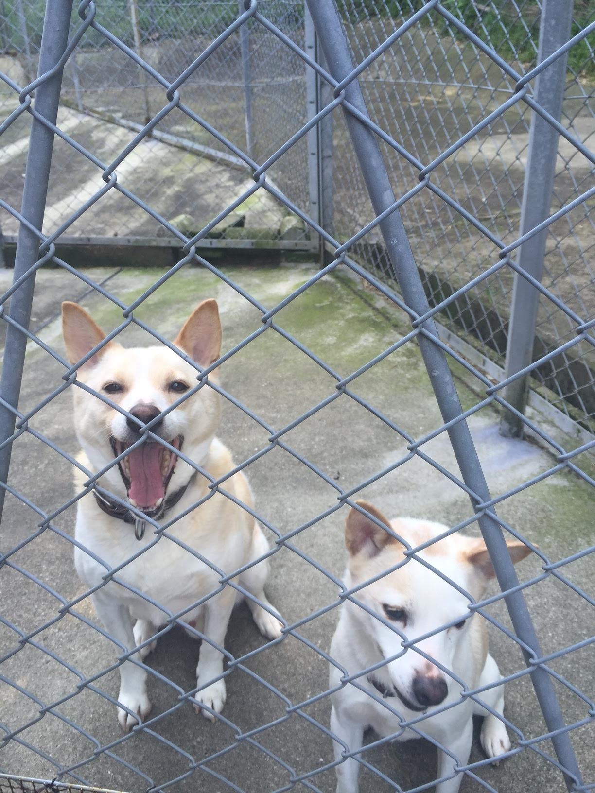 保護犬兄妹で引き取った「ピーター」と「ベス」です。
