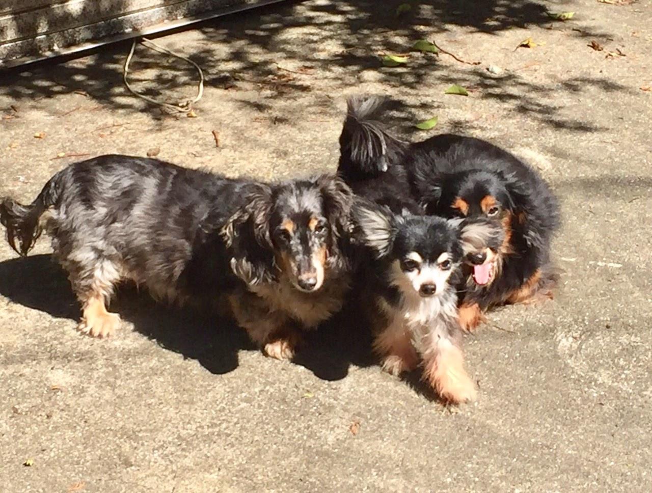 仲良しトリオがひなたぼっこ。左から「ラナ」「ポール」「クーパー」です。