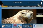volerie des aigles, Adler Flug-Show