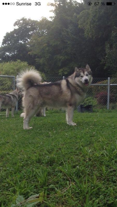 Acoma mit 2 Jahren