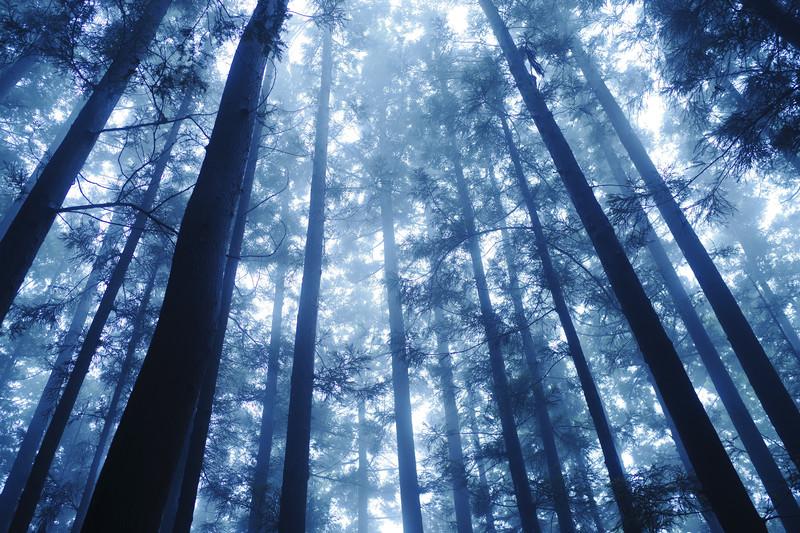 木材の性質は何で決まる?