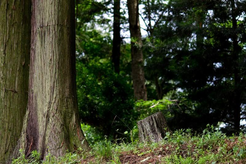 Desde los árboles a la madera