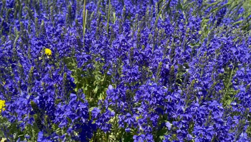 Es summt und brummt auf unserer bunten Blühwiese