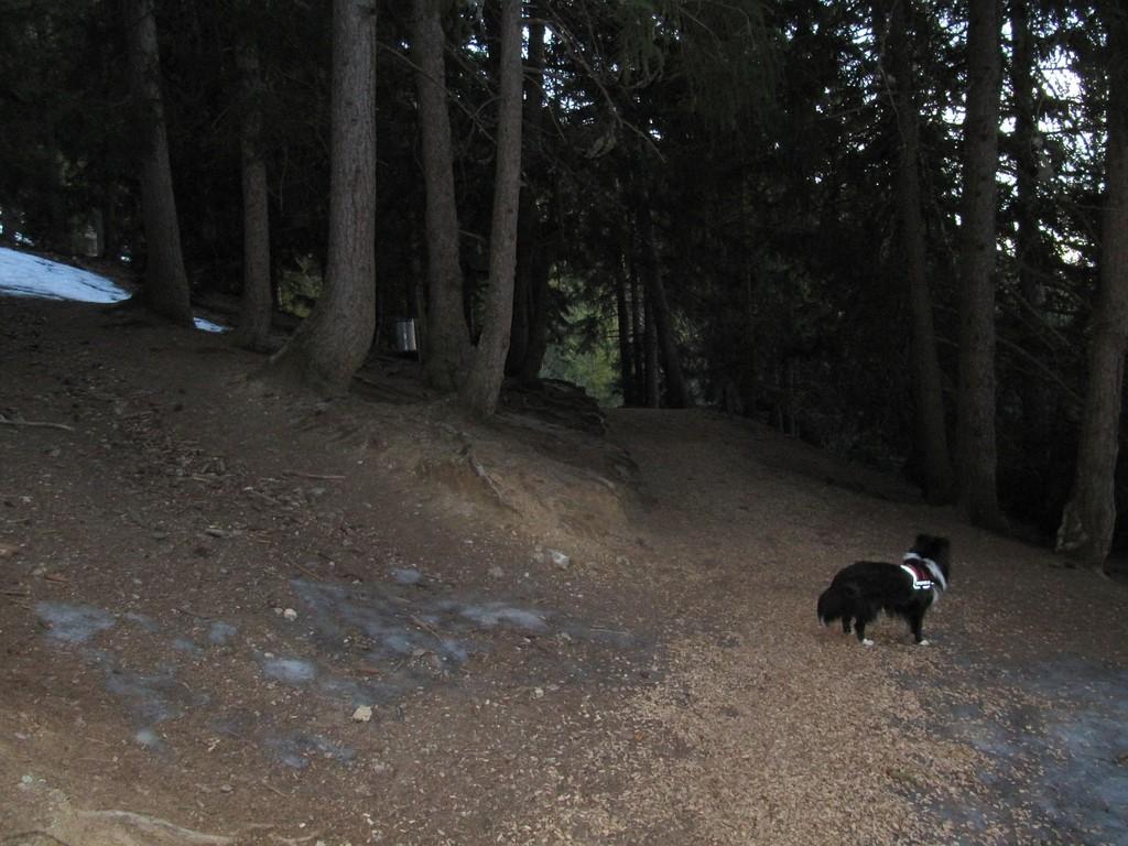 Unser Morgenspaziergang im Eichhoernchenwald!